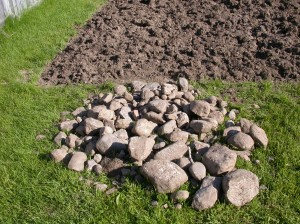 The pile of rocks I was left with after hand-tilling